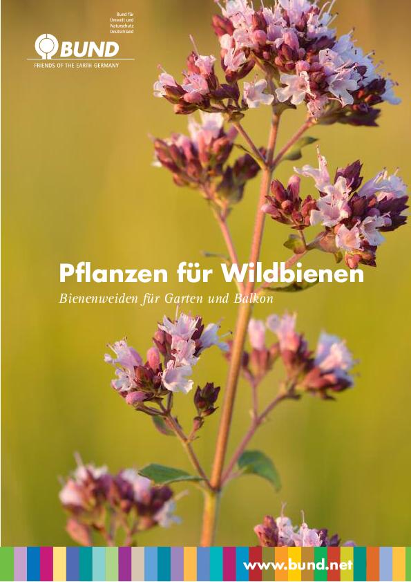 pflanzen f r wildbienen bienenweiden f r garten und balkon bund e v On pflanzen für wildbienen