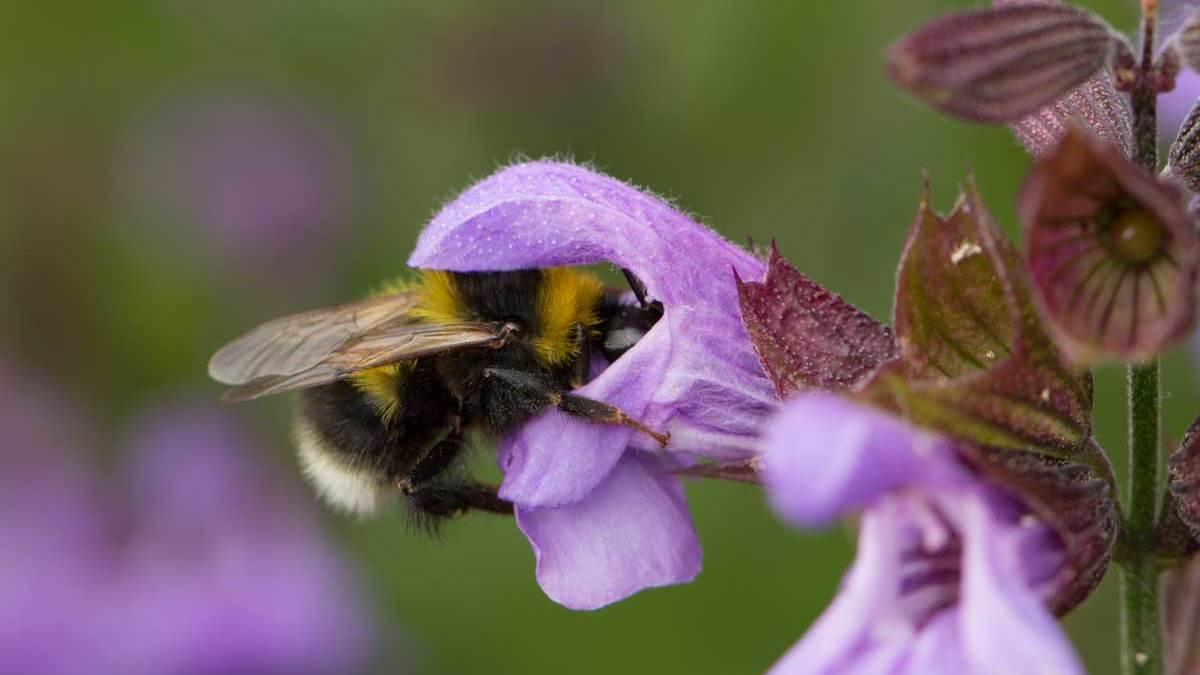 Hilfe Fur Wildbienen Tipps Fur Balkon Terrasse Und Garten Bund E V