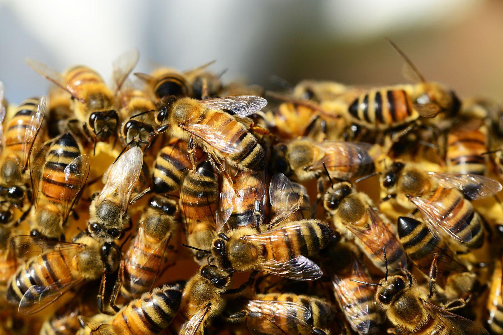 Bienensterben Durch Pestizide Neonikotinoide Töten Die Bestäuber