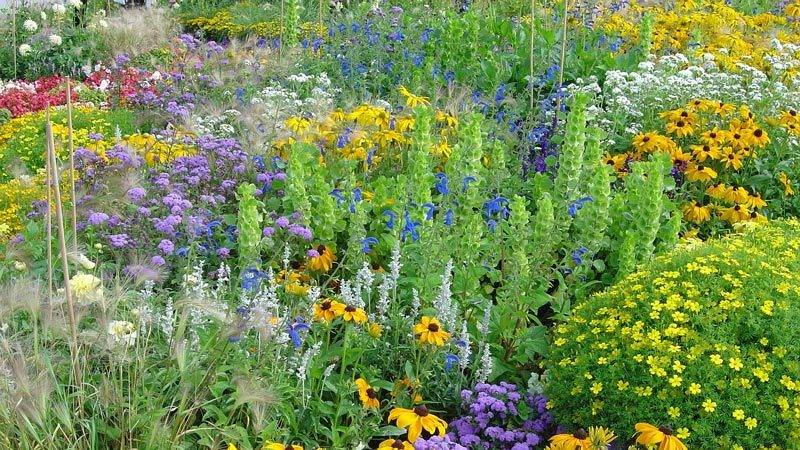 Pflanzen Mit Biosiegel Für Balkon Und Garten Bund Ev