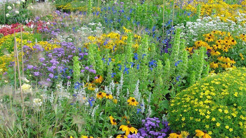 achten sie beim bepflanzen von garten und balkon auf biosiegel bewildlife pixabaycom - Garten Was Wann Pflanzen