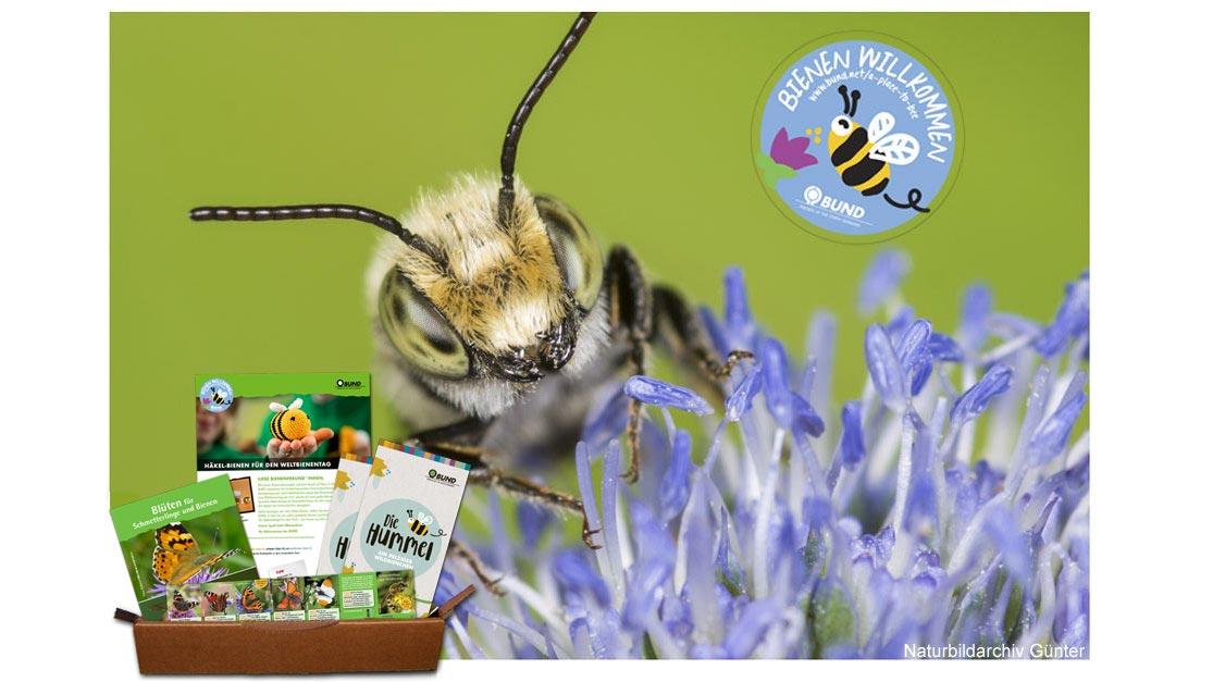 jetzt bienen und wildbienen willkommen hei en und bienenretter in werden bund e v. Black Bedroom Furniture Sets. Home Design Ideas