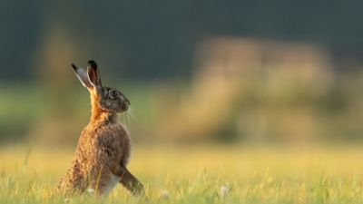 April-Tipp: Der Hase Foto: Vincent van Zalinge/Unsplash.com